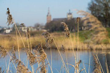 Sint Janskathedraal, vanuit het Bossche Broek van