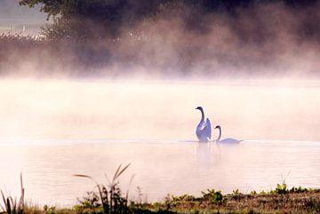 Zwanen in de mist von Hielke Roelevink