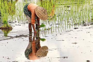 Spiegelbeeld van Rijstplanter van Eduard Lamping