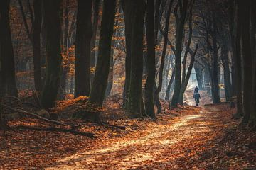 Paardrijden in de bossen tijdens de herfst van Fotografiecor .nl