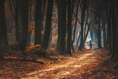 Paardrijden in de bossen tijdens de herfst