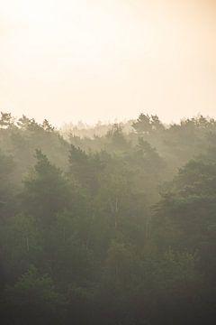 Sonnenaufgang über den Baumkronen von Manon Verijdt