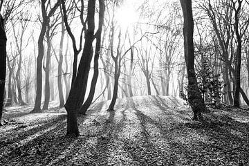 Der Wald der tanzenden Bäume von Dorien Koppenberg