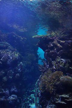 Unterwasser-Welt 2  von