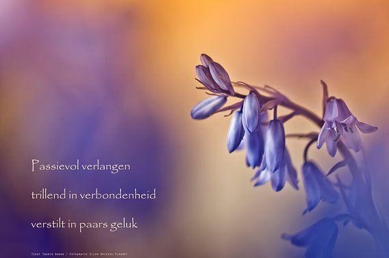 Boshyacint van Beeld en Poëzie