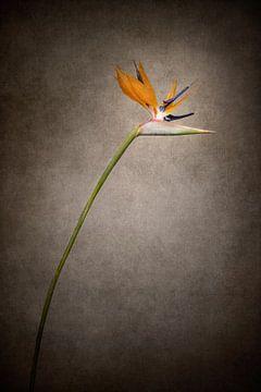 Sierlijke bloem - De Strelitzie | Vintage stijl van Melanie Viola