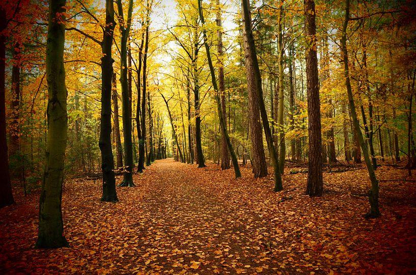 Pad door kleurig herfstbos  / Path through colorful autumn forest van Cornelis Heijkant