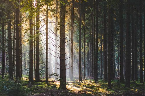Lichtpunt in het bos van