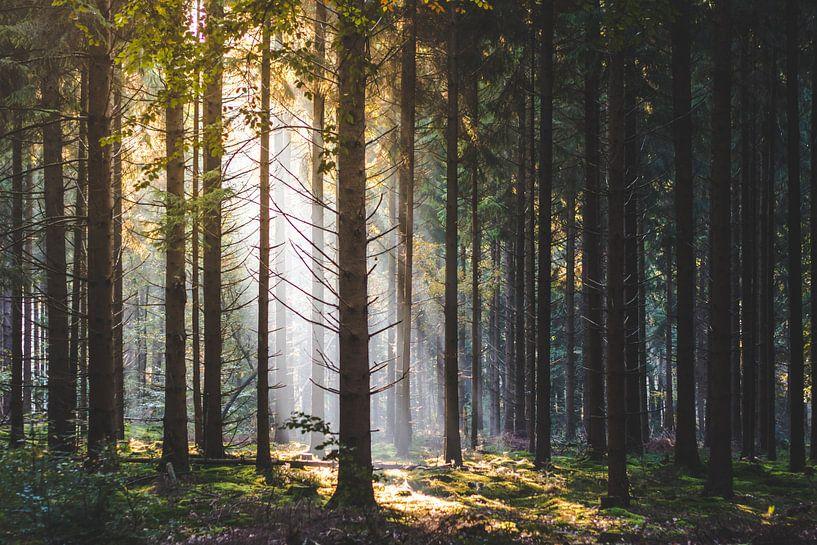 Lichtpunt in het bos van Thijs Pausma
