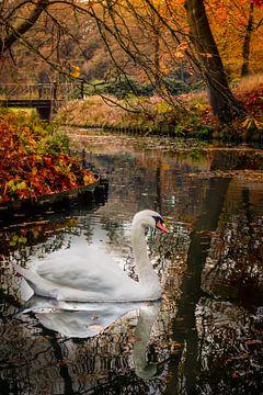 Zwaan en herfst van Edward Sarkisian