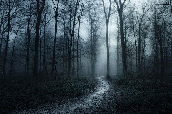 Verdwaald in donker bos
