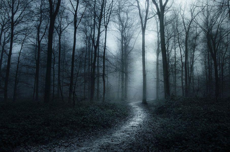 Verdwaald in donker bos van Rob Visser