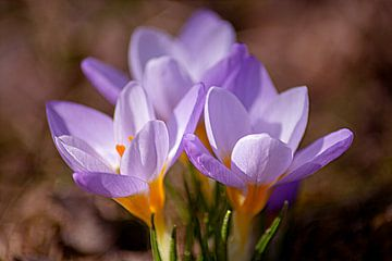 Blooming purple van Michael Nägele