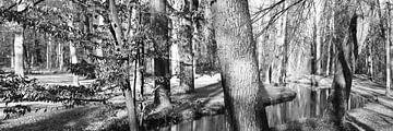 Waldlandschaft von Carmen Varo