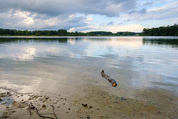 Stock im Wasser von Johan Vanbockryck