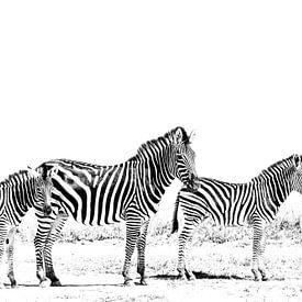 3 Zebras von Robert Styppa