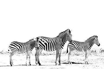 3 Zebras van