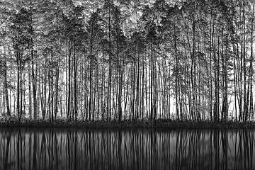 Pointillismus Natur, Roswitha Schleicher-Schwarz von 1x