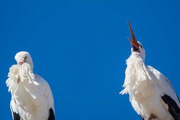 Twee ooievaars in de lucht van Tobias Luxberg