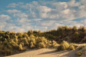 Strand en duin in sfeerlicht van
