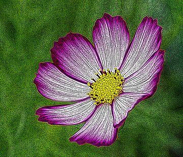 Kosmos Blume von Jose Lok