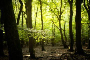 Grüner Tag von Kees van Dongen