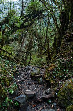 Mistig mossig bos. Bos op de trekkingroute naar Annapurna. Nepal. van Michael Semenov