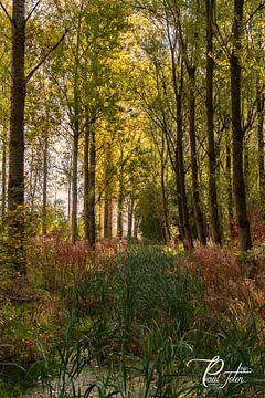 Herfst von Paul Tolen