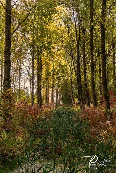Herfst van Paul Tolen