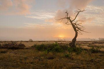 zonsopkomst van Frank van Middelkoop