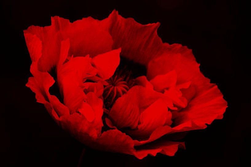 rood&zwart van Yvonne Blokland