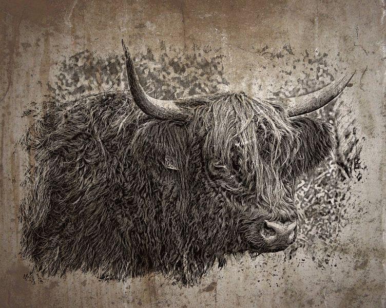 Schotse hooglander van Carla van Zomeren