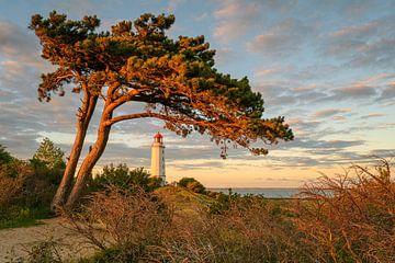 Leuchtturm Dornbusch von Robin Oelschlegel