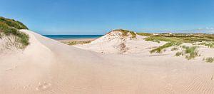 Duinen in Het Noordhollands Duinreservaat, strand en de Noordzee, Bergen aan Zee, Noord-Holland, Ned
