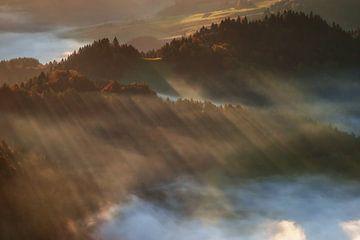 Brouillard à Pieniny sur Wojciech Kruczynski