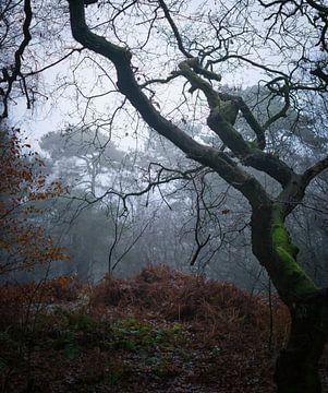 Herfst scene in de Lage Vuursche van Pascal Raymond Dorland