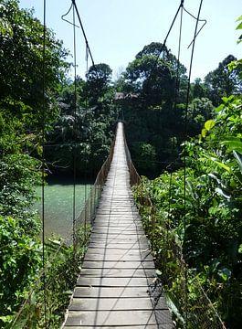 Jungle brug op Sumatra van Myrthe Visser-Wind