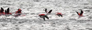flamingo's 4 van Marloes van der Beek-Rietveld