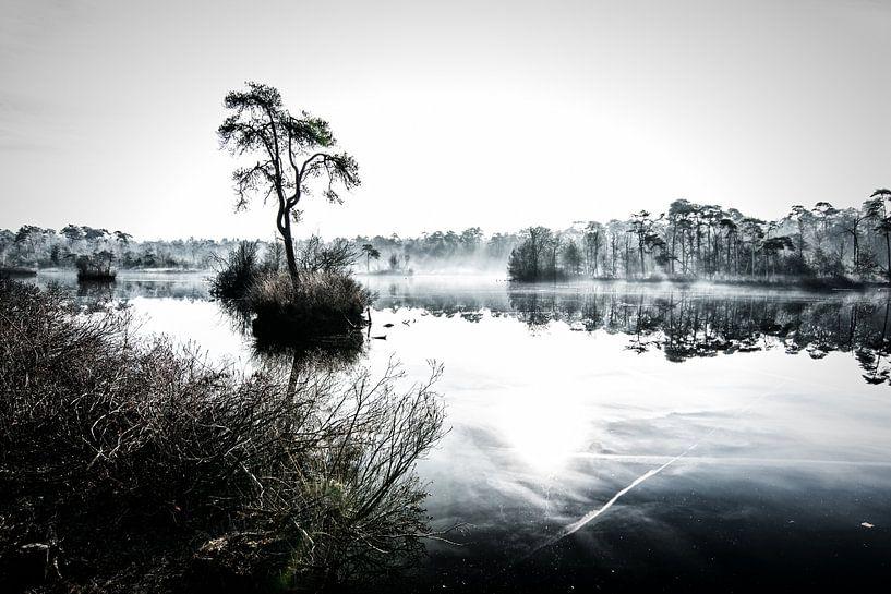 Ven in de mist van René van der Horst