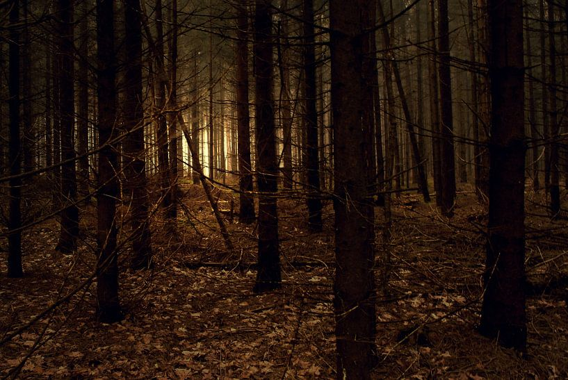 Fairy Forest van Frank Tauran