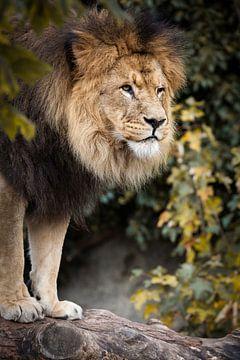 Leeuw van Victor van Dijk