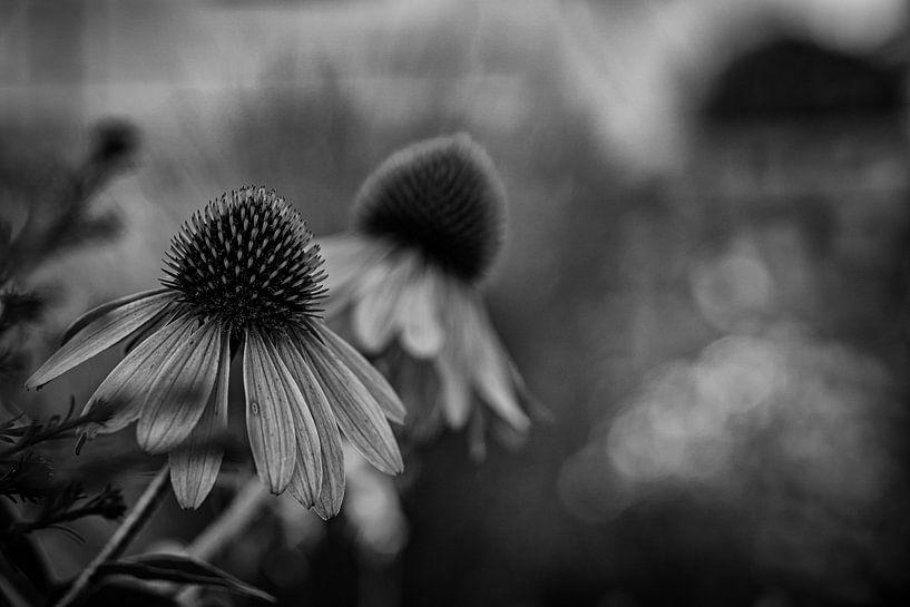 Fleurs dans le jardin sur Thilo Wagner