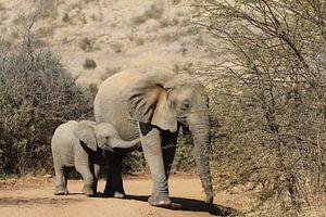 Olifant met jong Zuid Afrika van Ralph van Leuveren