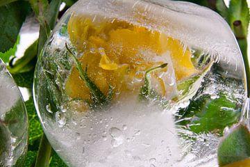 Gelbe Rose in Eiskugel von Marc Heiligenstein