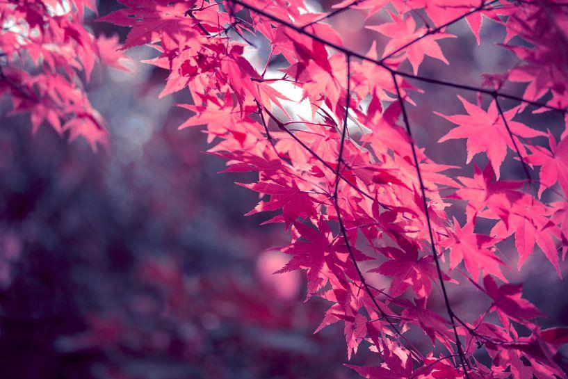 Autumn foliage in backlight van INA FineArt