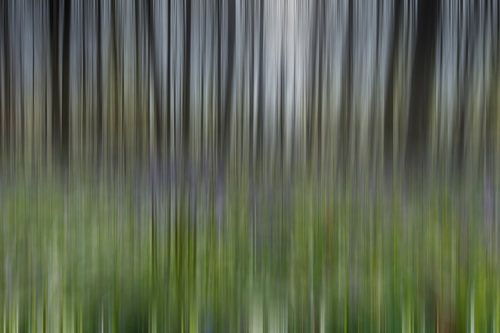 Hallerbos Abstract