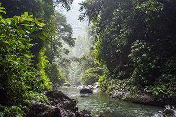Kalme junglerivier van Hugo Braun
