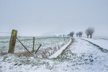 Knotwilgen in de sneeuw von Moetwil en van Dijk - Fotografie