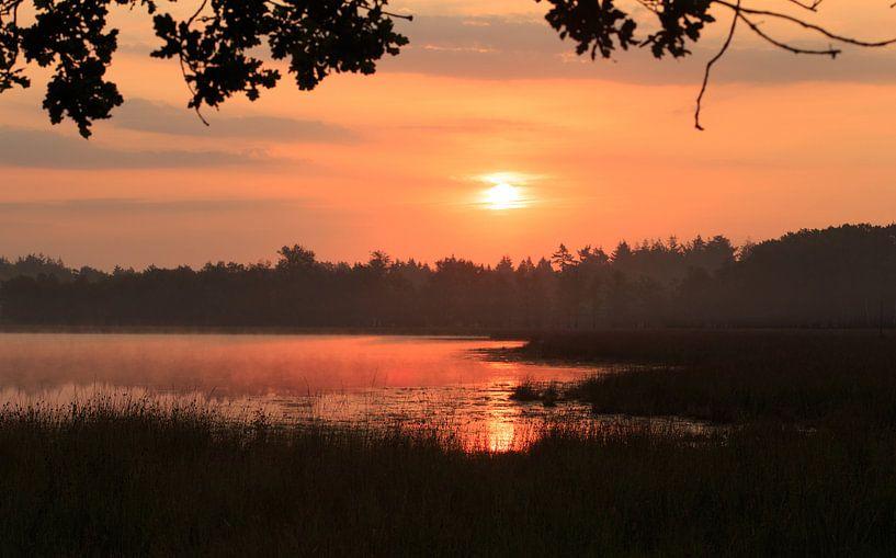 de zon komt op van hanny bosveld