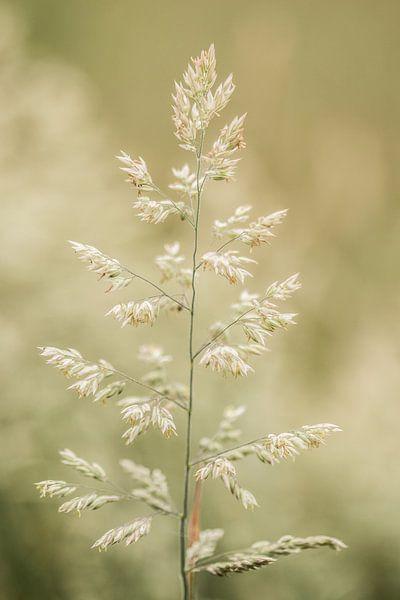 Gras... van Maja Ooms